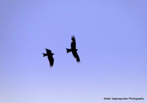 Kites-the High Flying Shadows