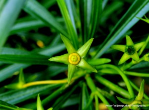 A new born flower in green