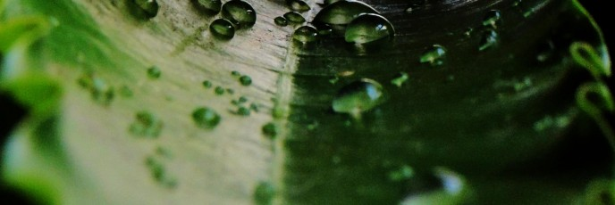The Green Perl of water drop