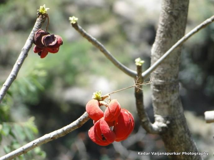 Beautiful red flower at Shivkhodi