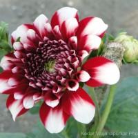 Ahmedabad Flower Show 2013